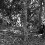 la contrebasse dans les bois
